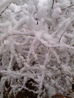 いよいよ/Winter season_d0090888_09030856.jpg
