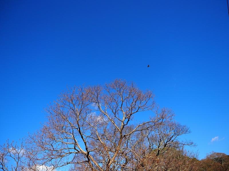 たかがブルー されどブルー_e0374932_14471140.jpg