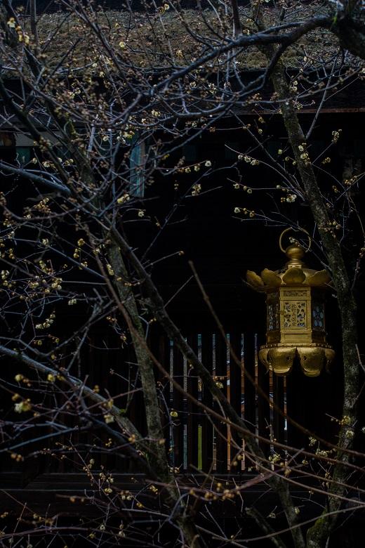 北野天満宮の蝋梅とちょっとだけ梅_e0363038_13122768.jpg