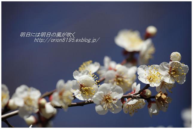 f0361079_16530216.jpg