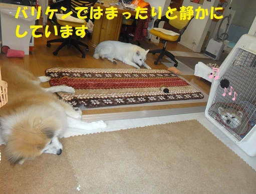 f0121712_14354388.jpg