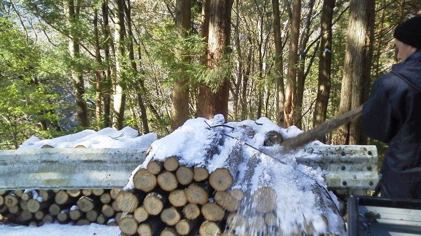 2月14日 ひさびさに椎茸畑。雪。_c0089831_23341633.jpg