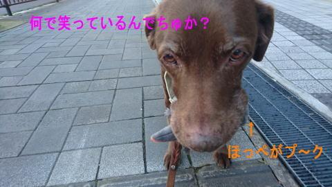 d0013645_11050527.jpg