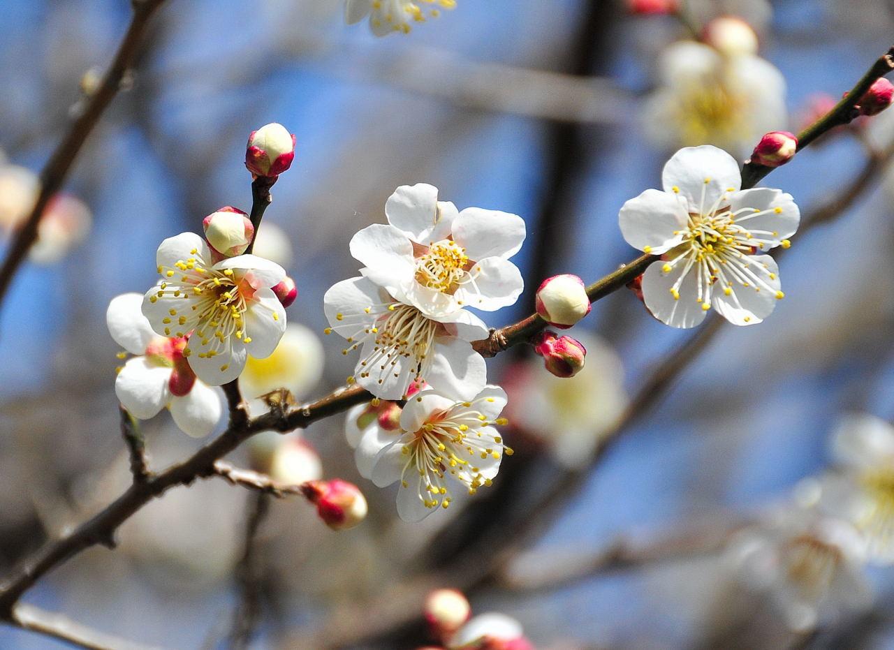 花粉に備えるカラダづくり_f0228073_12331405.jpg