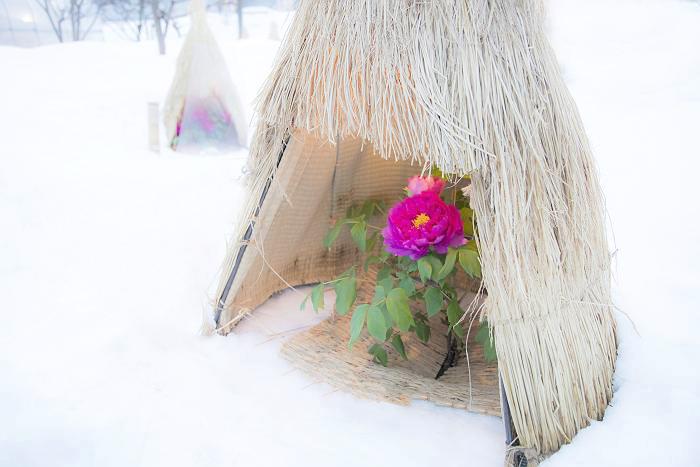 冬咲きボタン_c0077395_16351264.jpg