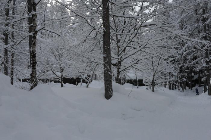 一色の森 雪中チャンプ 3_a0049296_19410816.jpg