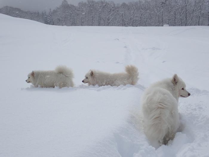 一色の森 雪中チャンプ 3_a0049296_20114335.jpg