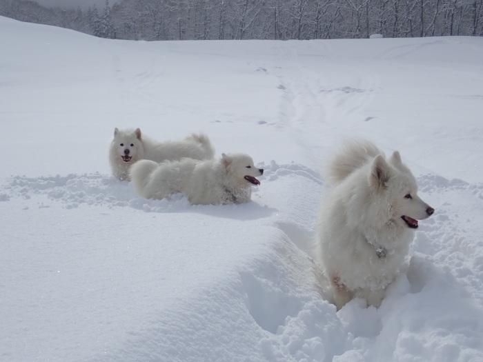 一色の森 雪中チャンプ 3_a0049296_20115761.jpg