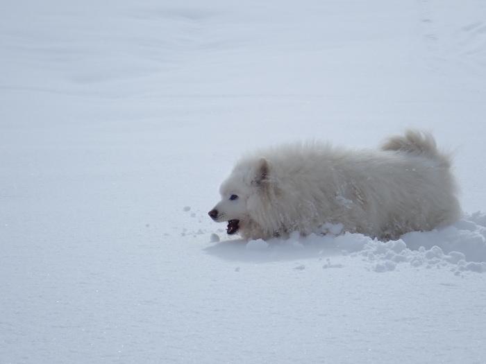 一色の森 雪中チャンプ 3_a0049296_20122172.jpg