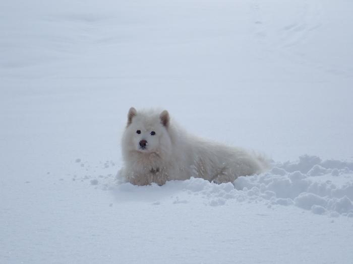 一色の森 雪中チャンプ 3_a0049296_20125661.jpg