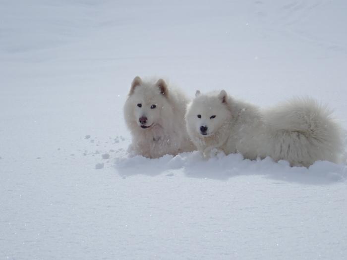 一色の森 雪中チャンプ 3_a0049296_20130945.jpg