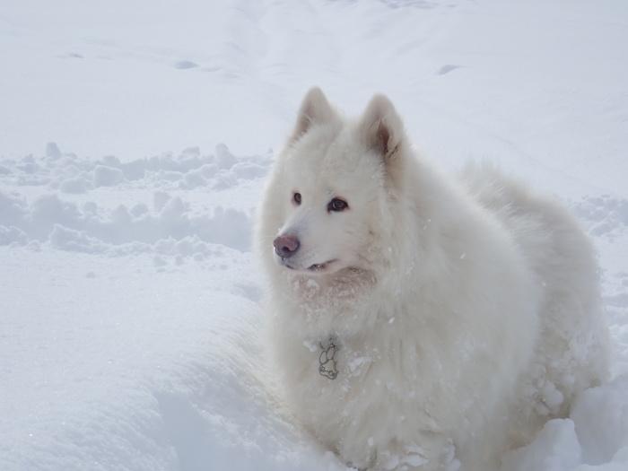 一色の森 雪中チャンプ 3_a0049296_20140757.jpg