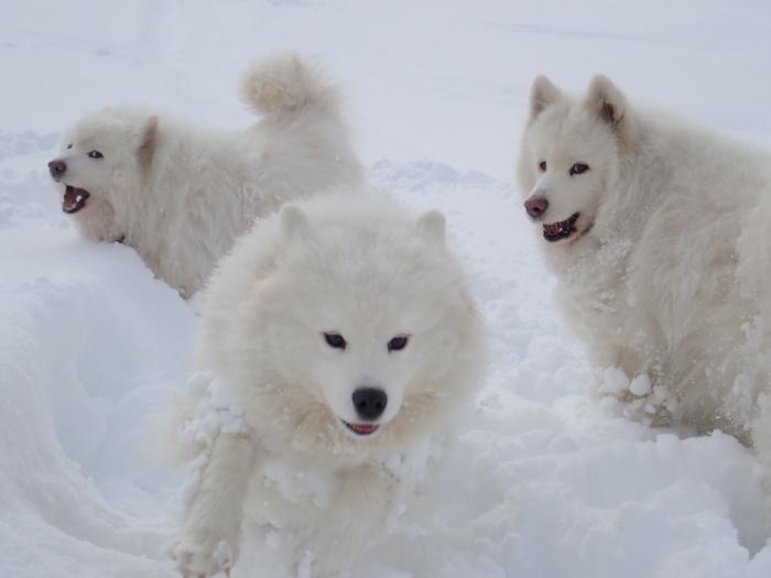 一色の森 雪中チャンプ 3_a0049296_20142150.jpg
