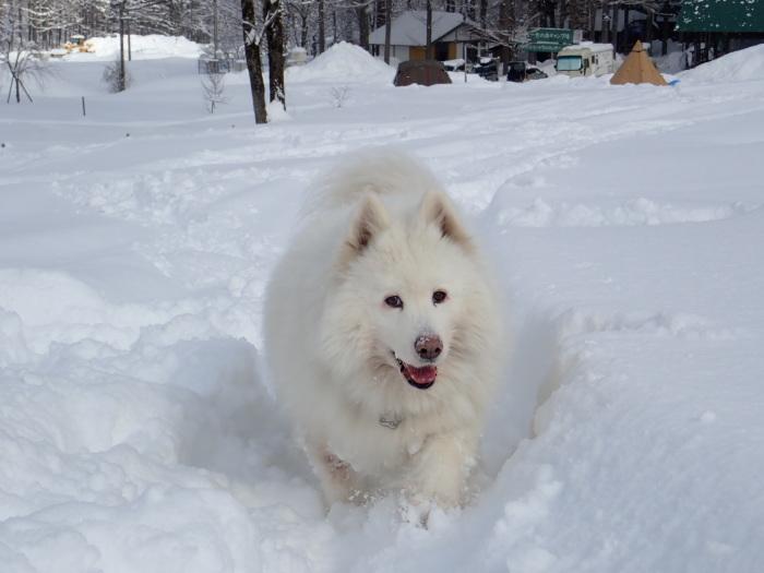 一色の森 雪中チャンプ 3_a0049296_20145040.jpg