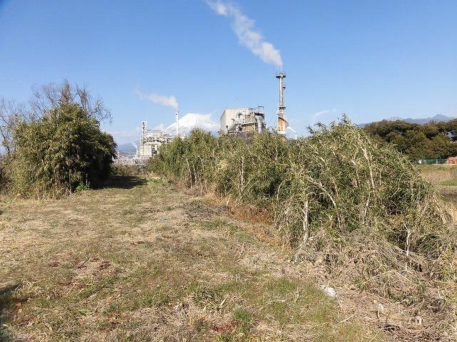 「竹の1m切り」って知ってますか? 滝川の竹林の退治計画を現場で試し刈り_f0141310_00245073.jpg