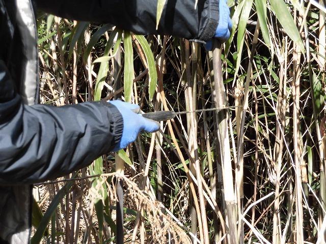 「竹の1m切り」って知ってますか? 滝川の竹林の退治計画を現場で試し刈り_f0141310_00250836.jpg
