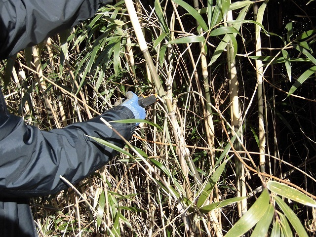 「竹の1m切り」って知ってますか? 滝川の竹林の退治計画を現場で試し刈り_f0141310_00251841.jpg