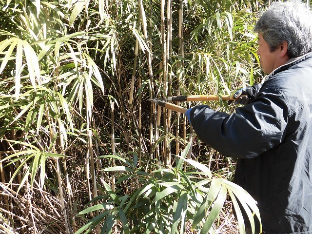 「竹の1m切り」って知ってますか? 滝川の竹林の退治計画を現場で試し刈り_f0141310_00252901.jpg