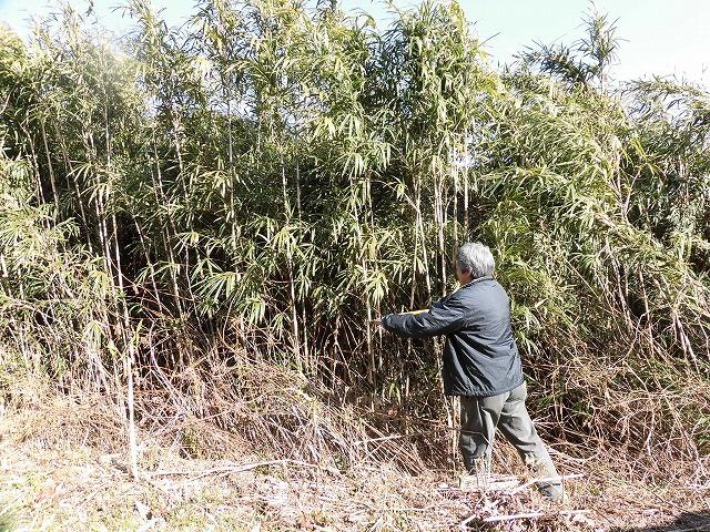 「竹の1m切り」って知ってますか? 滝川の竹林の退治計画を現場で試し刈り_f0141310_00254022.jpg