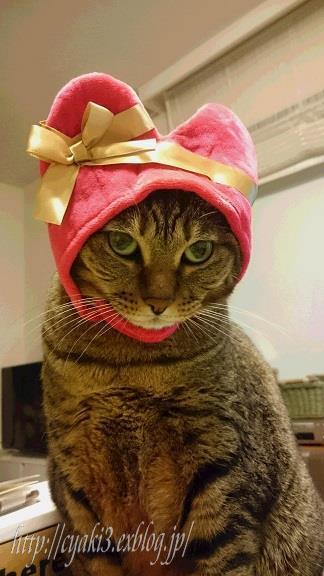 猫のバレンタインディ_a0078020_19561142.jpg