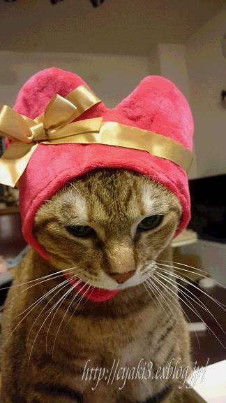 猫のバレンタインディ_a0078020_19561655.jpg