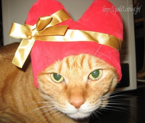 猫のバレンタインディ_a0078020_19562327.jpg