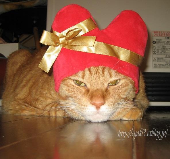 猫のバレンタインディ_a0078020_19562766.jpg