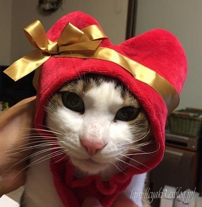 猫のバレンタインディ_a0078020_19563558.jpg