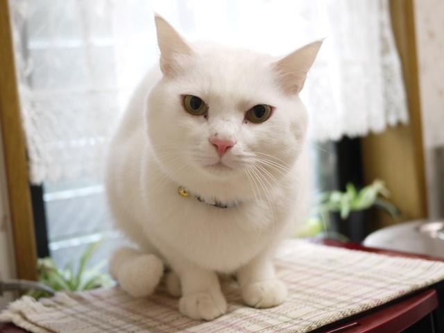 猫のお留守番 あられくん編。_a0143140_23285059.jpg