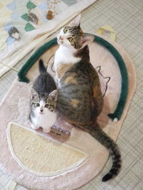 猫のお預かり ぽんずちゃんおろしくん編。_a0143140_23404981.jpg