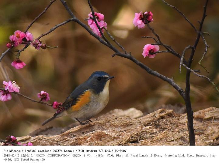 秋ヶ瀬公園・子供の森 2018.2.12(1)_c0062451_2253462.jpg