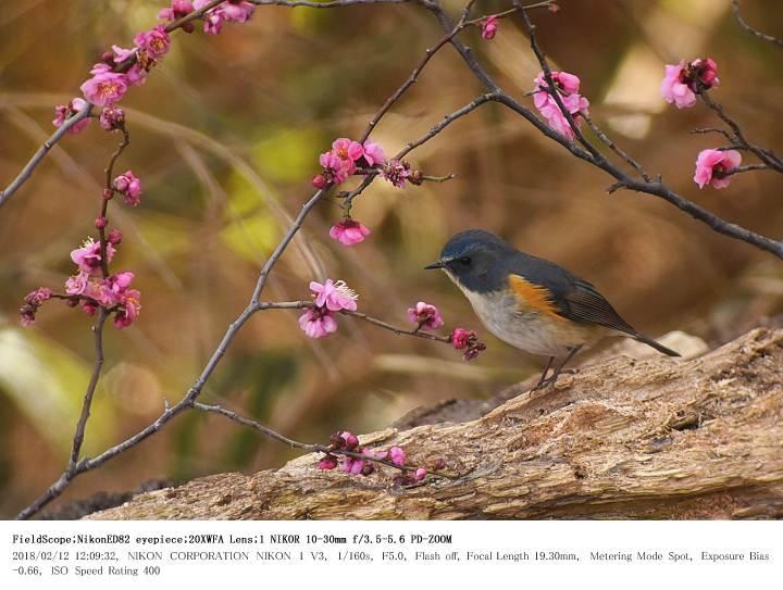 秋ヶ瀬公園・子供の森 2018.2.12(1)_c0062451_2265365.jpg