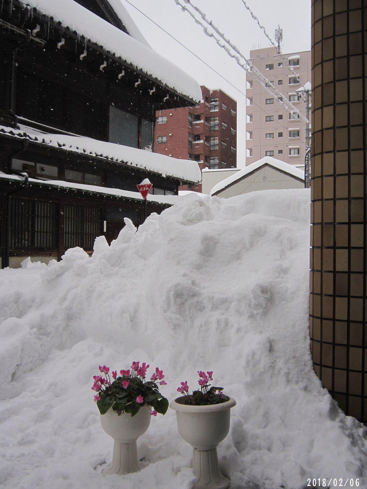 町内道路もすっきり☆ 春一番 も吹きました❀(2月20日追記あり)_a0207574_20253316.jpg