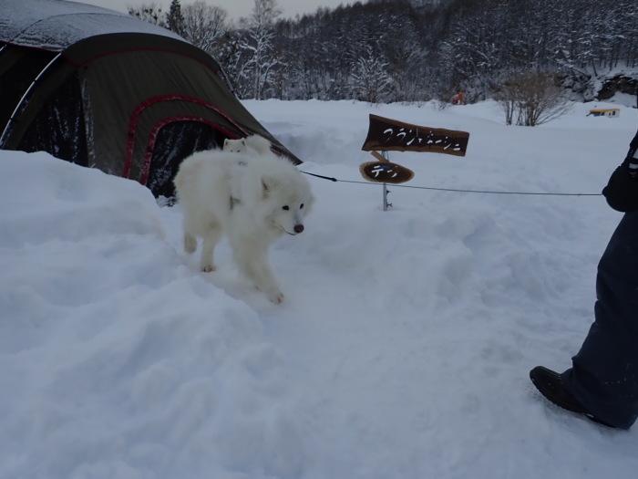 一色の森 雪中キャンプ 4_a0049296_20065997.jpg