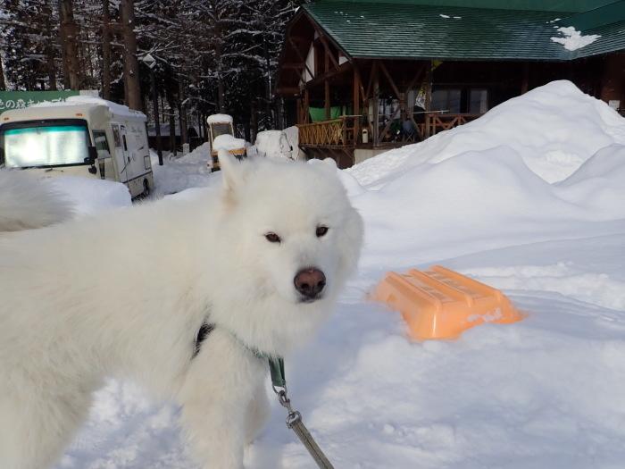 一色の森 雪中キャンプ 4_a0049296_20072095.jpg