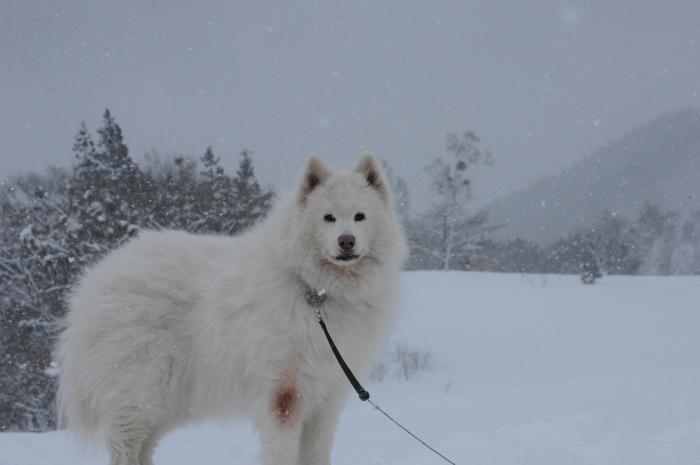一色の森 雪中キャンプ 4_a0049296_20185955.jpg