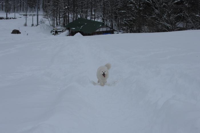 一色の森 雪中キャンプ 4_a0049296_20280554.jpg
