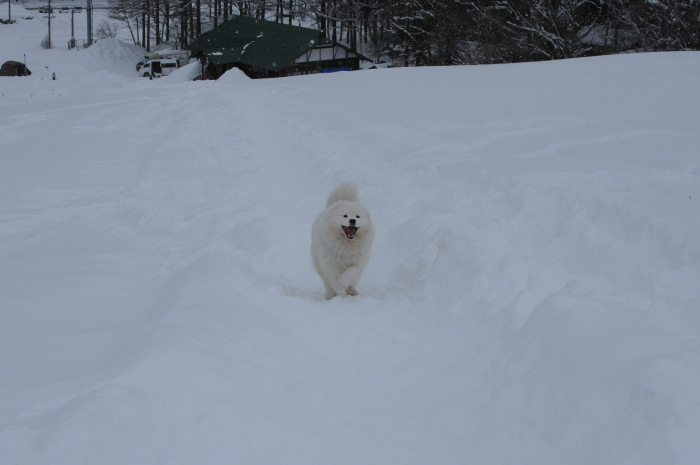 一色の森 雪中キャンプ 4_a0049296_20282926.jpg