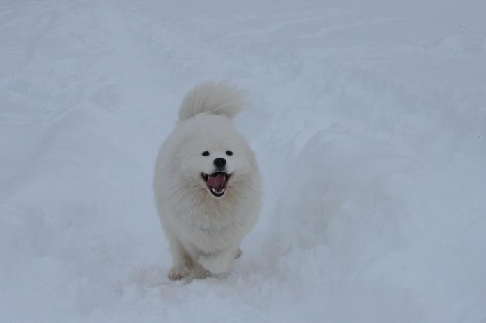 一色の森 雪中キャンプ 4_a0049296_20292441.jpg