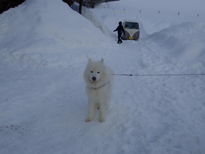 一色の森 雪中キャンプ 4_a0049296_20352188.jpg