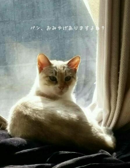 浅草のペリカン_f0255704_20012798.jpg