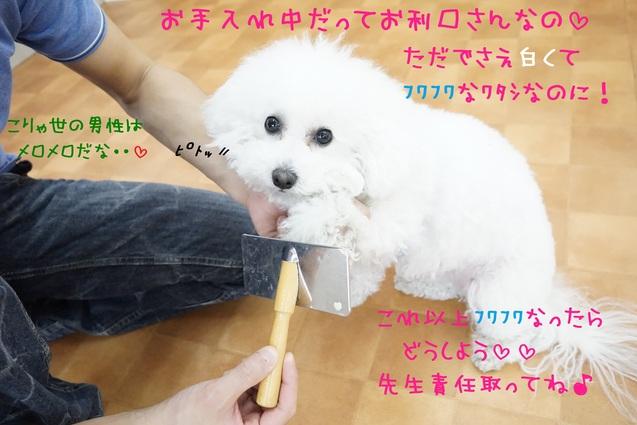 d0220513_16494935.jpg