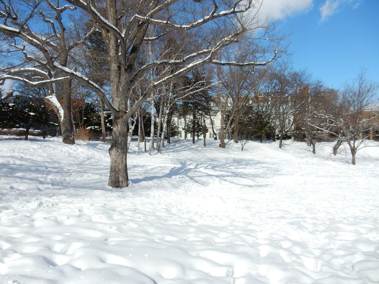 中央ローンの雪だるままつり_c0025115_23085521.jpg