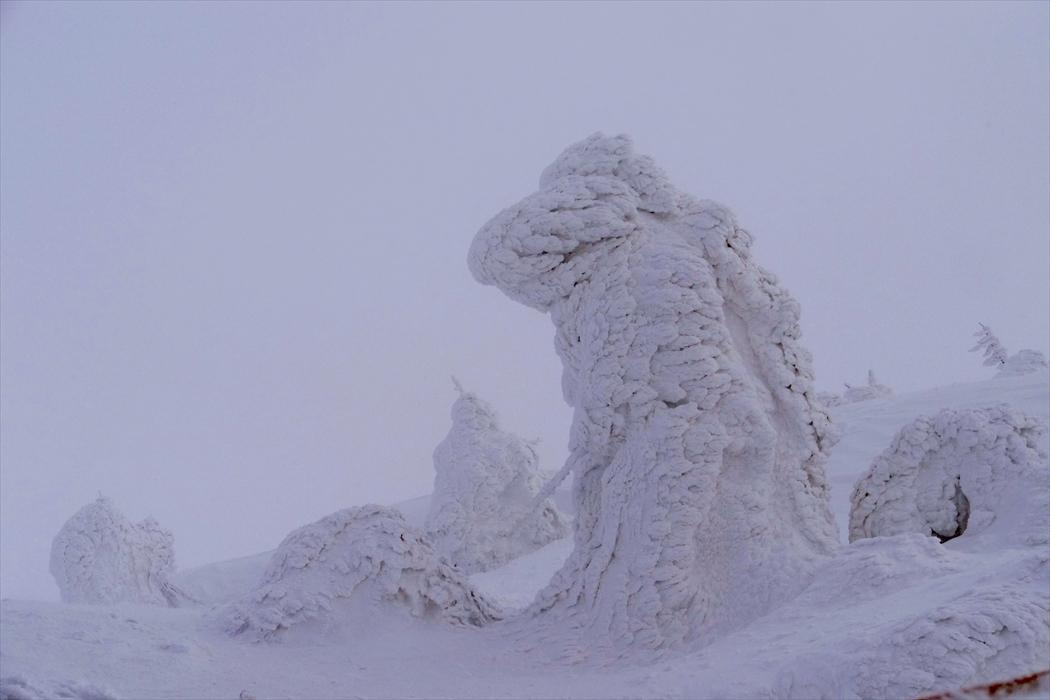 山形県山形市蔵王温泉スキー場の 「樹 氷」_d0106628_22232608.jpg