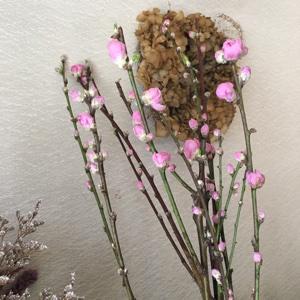 春の花_a0077632_10203041.jpg
