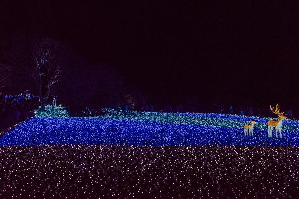 なら瑠璃絵~冬七夕ロード_e0363038_14151465.jpg