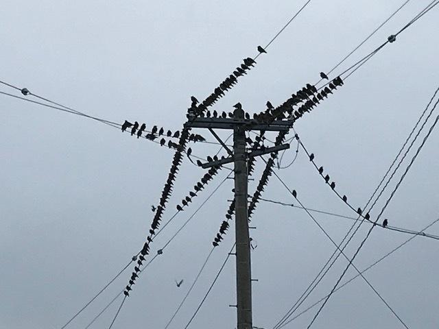 鳥の生活_e0226943_23160127.jpeg