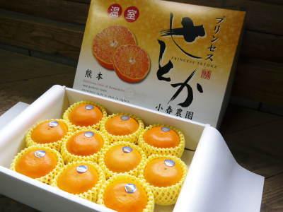 究極の柑橘「せとか」 令和2年出荷予定分はいよいよ残りわずか!ご注文はお急ぎください!_a0254656_18292362.jpg