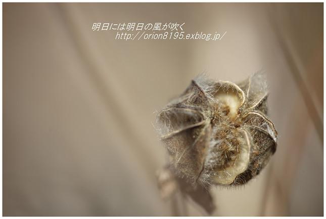 f0361079_19523089.jpg