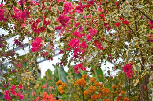杏里ファームのおひなまつりに片野聡さんが登場♪♪_f0236594_23022634.jpg